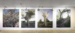 Endless vision, Anne Rowland's gigapans within gigapans...